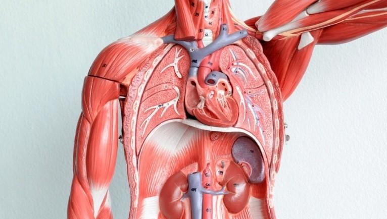 Как поставить на место опущенные внутренние органы