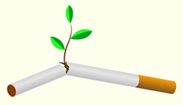 Растения способные помочь бросить курить