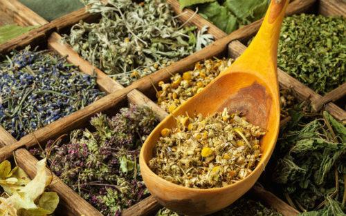 Сборы лекарственных трав для лечения кожных болезней
