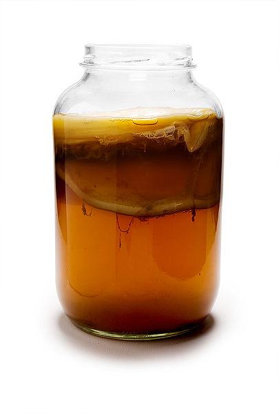 Чайный гриб – польза и вред популярного напитка