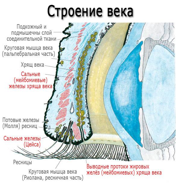 Что делать, если на глазу вскочил ячмень - оперативное лечения