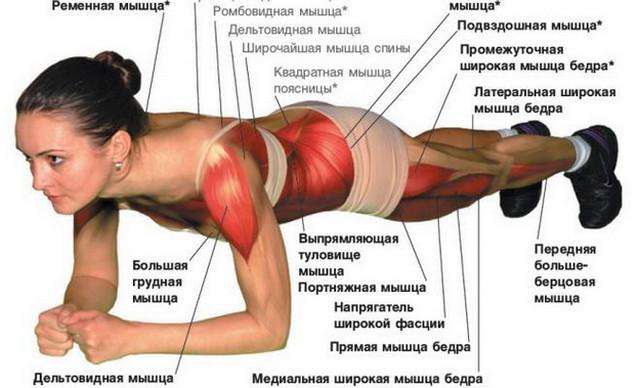 Планка. Как всего одно упражнение сделает из вас человека