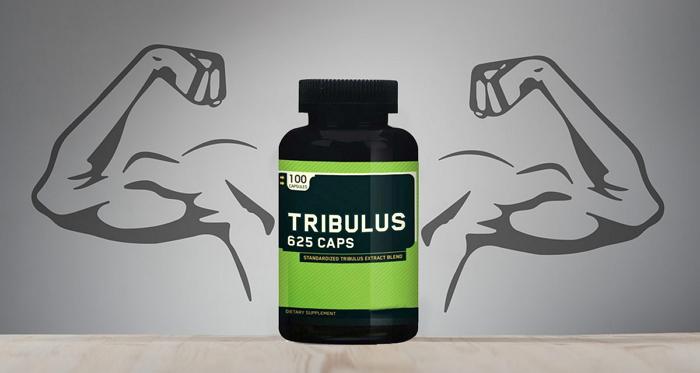 Что такое Трибулус – принцип действия и эффективность