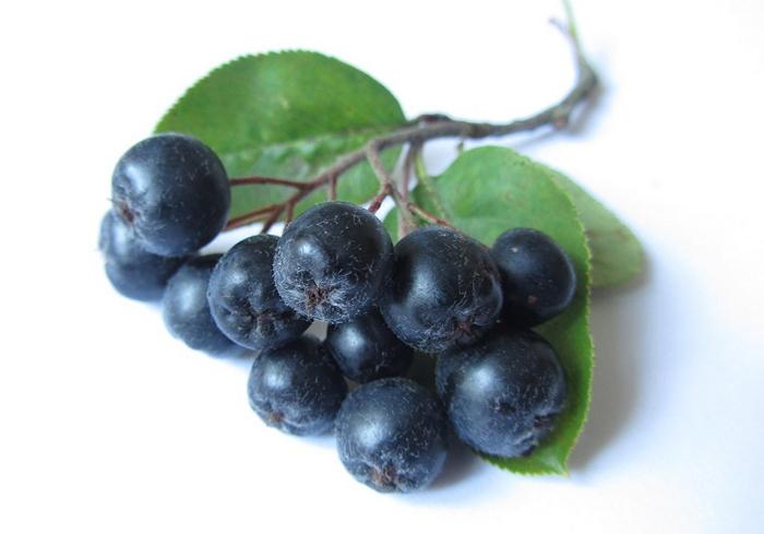 Черноплодная рябина: ее магические и лечебные свойства