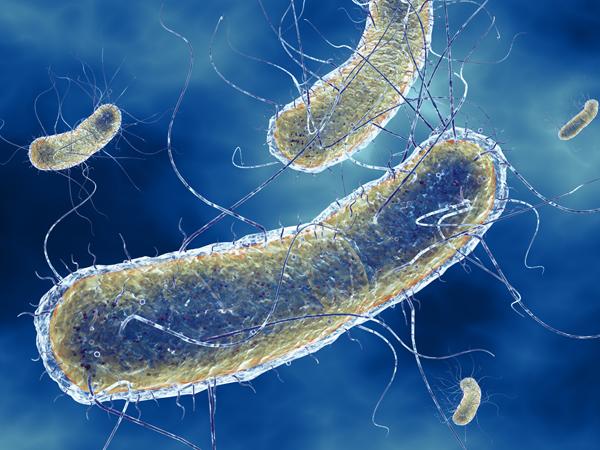 Что такое кишечная инфекция и как она атакует организм?