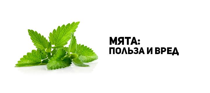 Мята – очень ценное для здоровья человека растение
