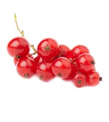 Полезные и лечебные свойства черной и красной смородины