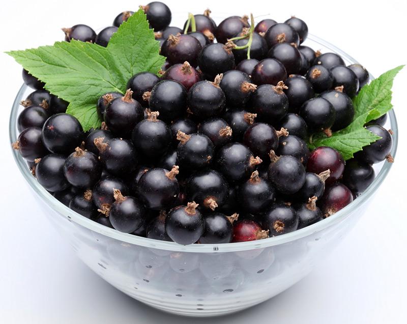 Черная смородина - ягода вечной молодости