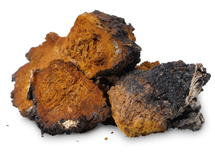 Берёзовый гриб чага лечит любые болезни