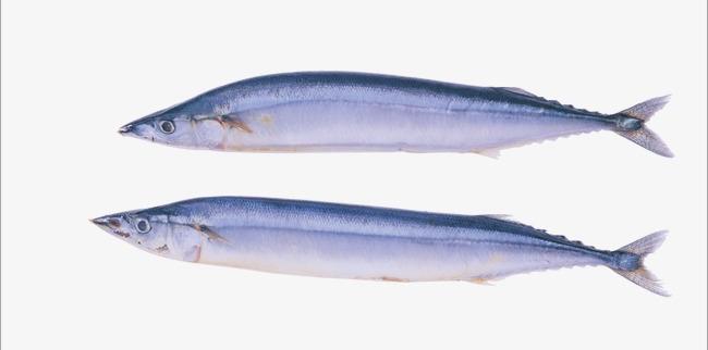 Рыба голубых кровей — сайра: какова ее польза и есть ли вред от консервов?