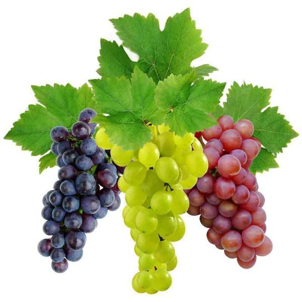 Виноград и его польза и вред для человеческого организма, нормы употребления и сферы использования