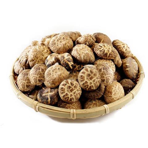 Польза и вред загадочных грибов шиитаке, применение в повседневной жизни