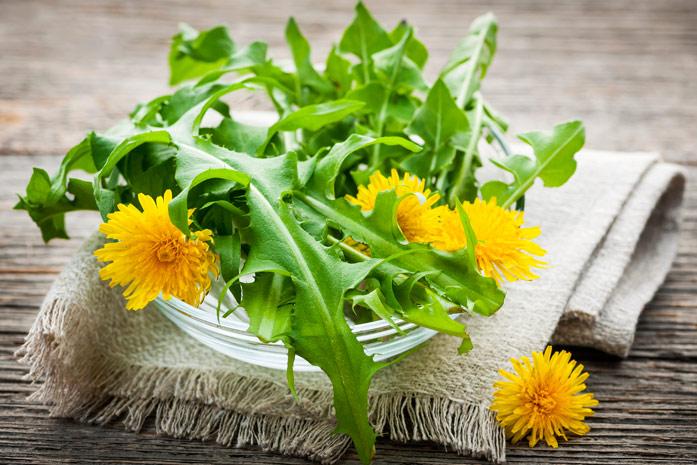 Полезные свойства и противопоказания листьев одуванчика, сферы применения
