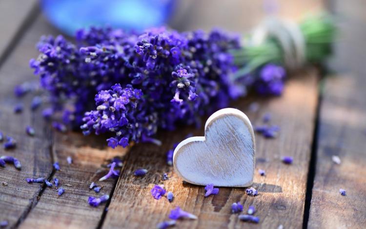 Лаванда и ее лечебные свойства