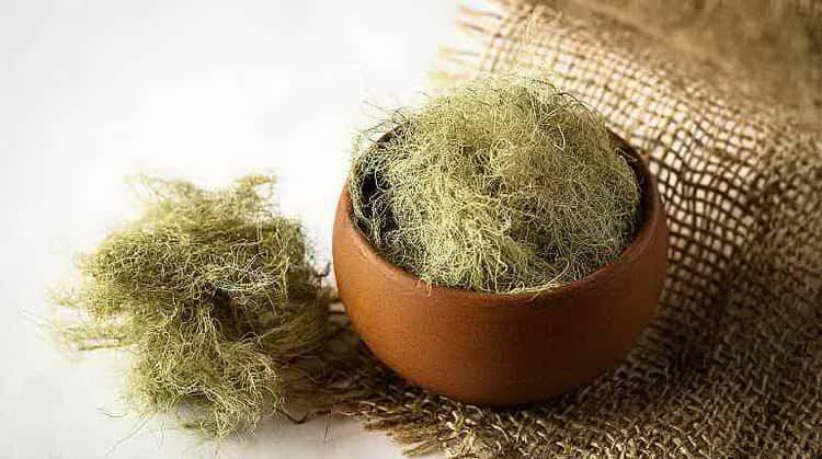 Лишайник - лечебные свойства и применение