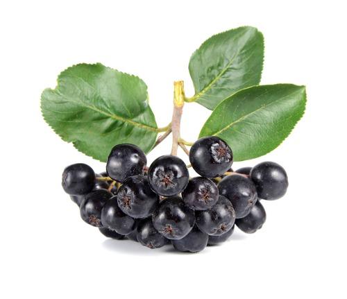 Черноплодка - лечебные свойства, применение в народной медицине