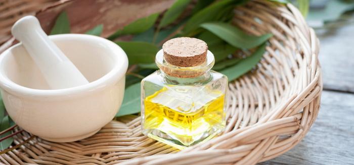 Эвкалипт - лечебные свойства, применение в народной медицине