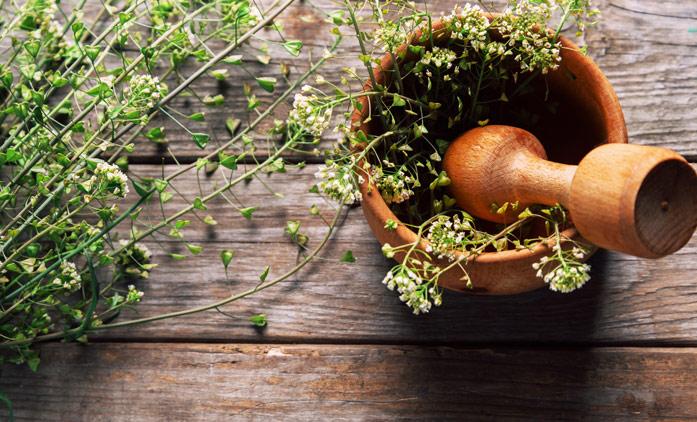 Пастушья сумка (трава) – полезные свойства и применение