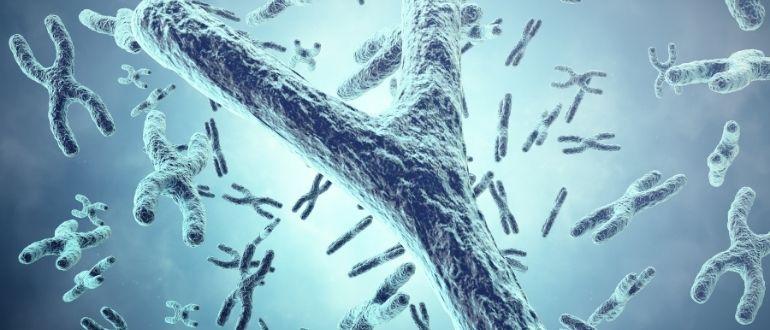 Почему у мужчин иммунитет слабее женского